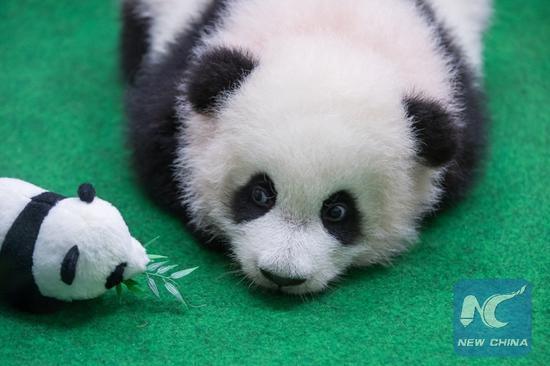 Panda protection brings huge economic values: study