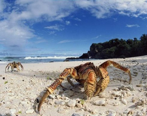 Chinese offer to eat invasive crab problem