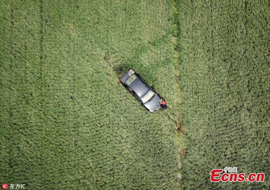 Flood sends car into paddy field