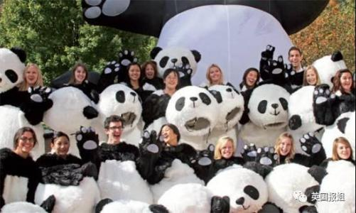 Expats seek jobs, like panda feeder, for TV show
