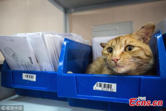 Russian Post's cat becomes employee of the year