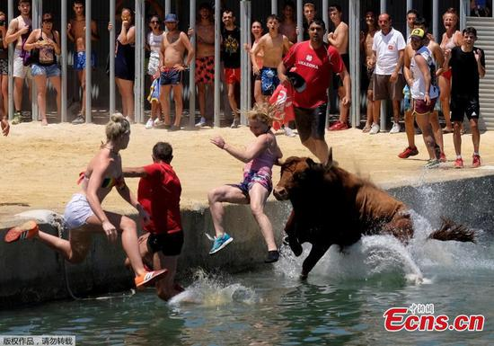 Bous a la Mar: bulls chase people into the sea in Spain