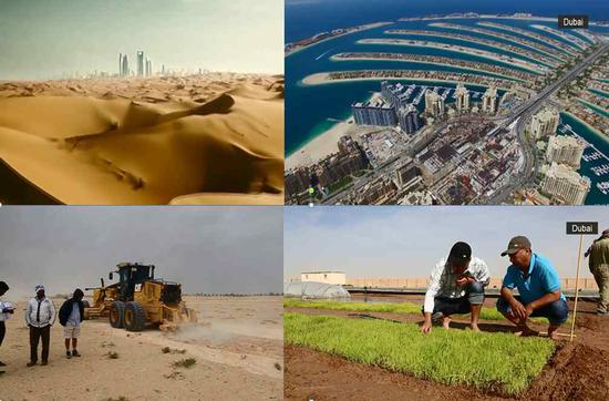 The Qingdao R&D Center planted sea rice in Dubai under bad desert conditions. /CGTN Photo