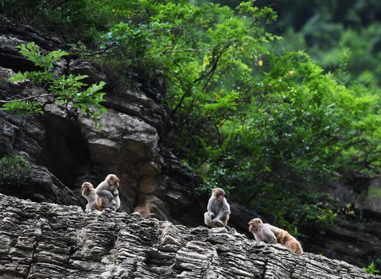 Monkey business proves profitable