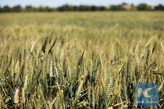 U.S. wheat farmers say they need trade agreements