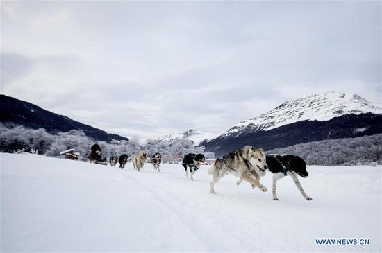 Sledges pulled by dogs attract tourists in S Argentina
