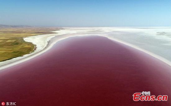 盐湖城的颜色在土耳其的阿克萨赖邦变成白色为红色