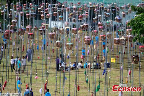 Bird-singing contest in Thailand