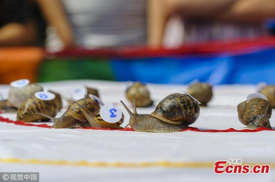 World Championship Snail Racing in England