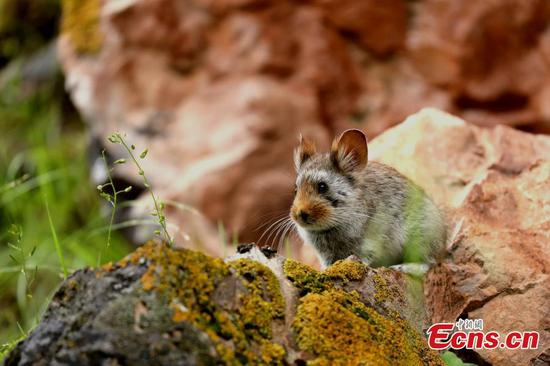 Wildlife thrives in northwestern Angsai