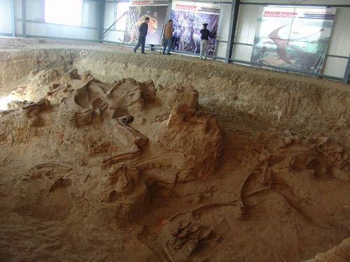 Skeletons unearthed in Northwest China (Photo/Courtesy of Xu Xing)