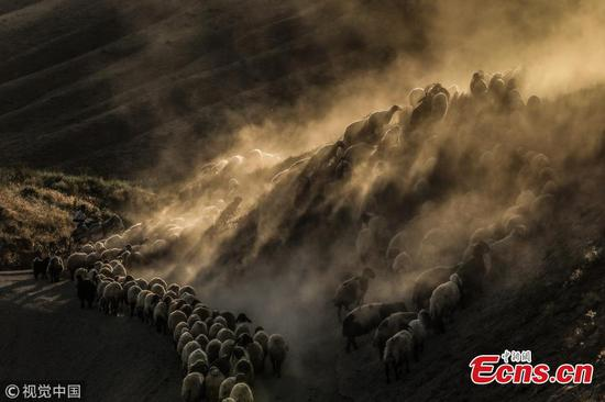 Journey of sheep herd in Turkey's Mountain Nemrut