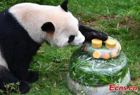 Fans celebrate panda Mao Zhu's 4th birthday