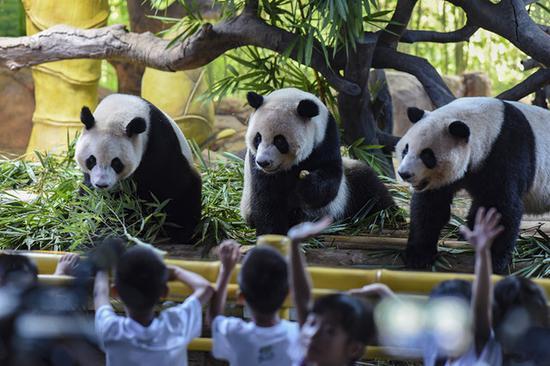 World's only panda triplets turn four in Guangzhou