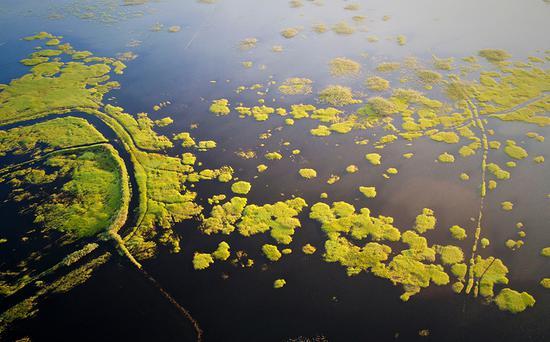 阳湖在夏天闪闪发光