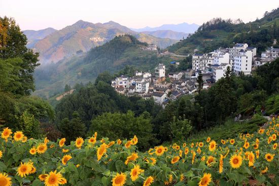 Sunflower scenery a summer delight in Anhui Province