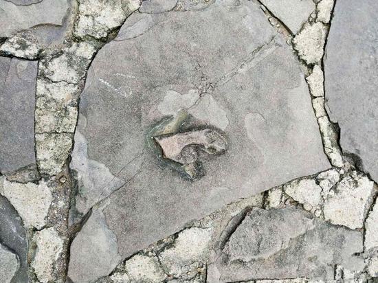 在承德联合国教科文组织遗产遗址的石板上发现的恐龙脚印