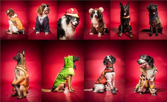 杭州救援犬标志着建军节