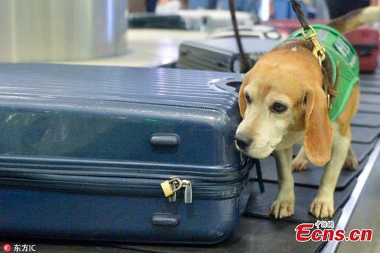 嗅探犬帮助机场隔离任务