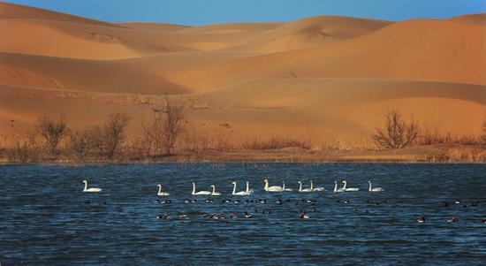 Kubuqi turnaround provides template for desert revival