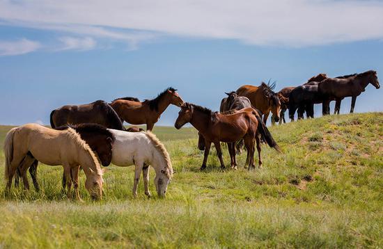Pastoral scene at Gegentara grassland, Inner Mongolia