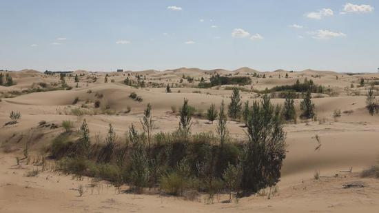 Government encourages locals to plant trees in Kubuqi Desert