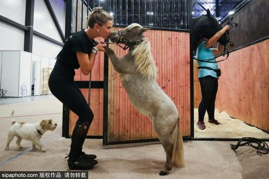 World's smallest horse stands tall at 49 cm