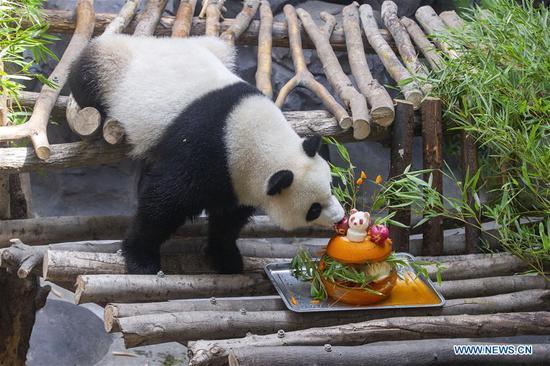 Giant panda twins celebrate 3rd birthday in China's Jiangsu