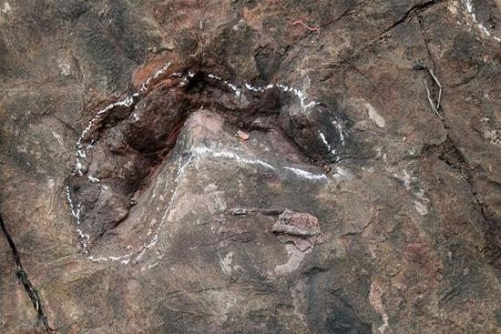 Early Jurassic dinosaur footprints discovered in Guizhou