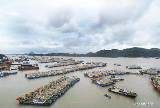 Boats are harbored in a safe haven to shelter from typhoon Yagi at a harbor in Wenling City, east China's Zhejiang Province, Aug. 12, 2018.  (Xinhua/Liu Zhenqing)