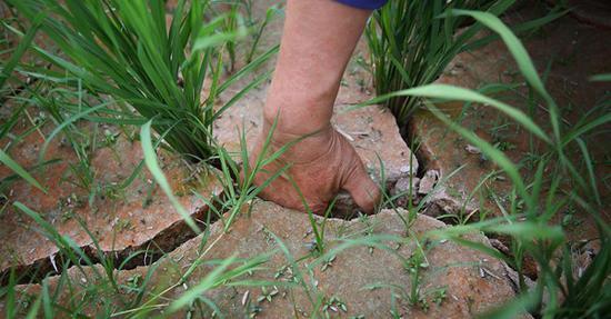 江西部分地区干旱持续数日