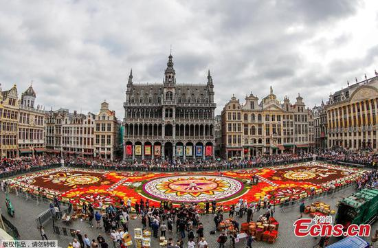 1,800 square meters flower carpet unveiled at Brussels' Grand Place