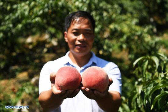 Shen Jianzhong shows fresh peaches at a planting base in the Wulong District of Chongqing, southwest China, Aug. 9, 2018. Shen Jianzhong, a 47-year-old villager of Fazi Village, developed a desertification-tolerant peach variety and helped villagers to get rid of poverty. (Xinhua/Wang Quanchao)
