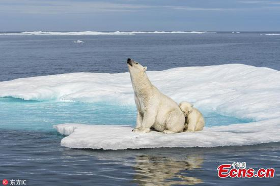 Polar bear photos reveal threat from rising sea levels