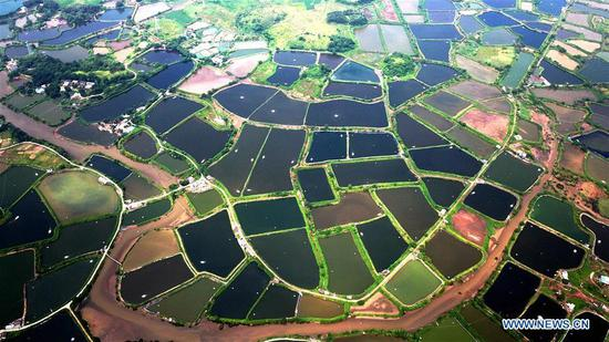 Aerial view of shrimp culture ponds in south China's Guangxi