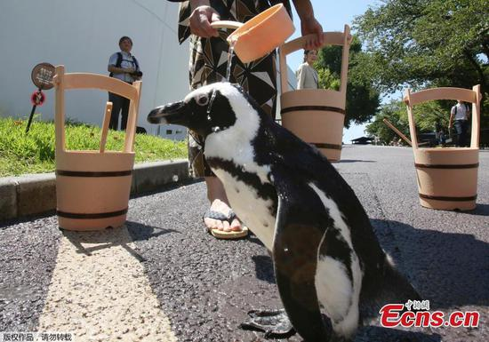 Keeping penguins cool in hot Tokyo