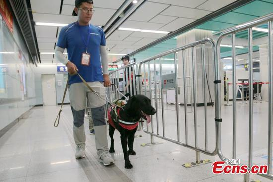 Xi'an first dog for the blind ready for service in Oct.