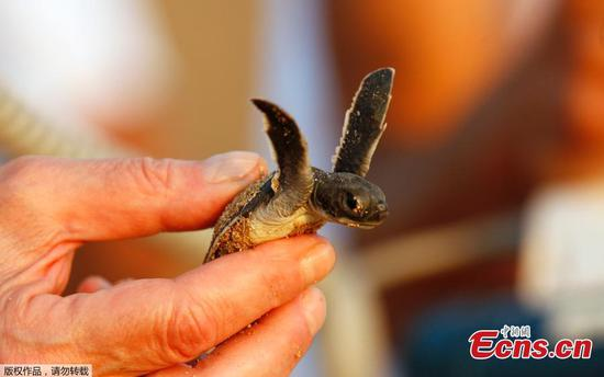 Conservationists strive to protect Lebanon's sea turtles