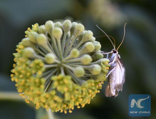Insect activities due to global warming cause more crop losses: study
