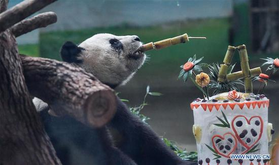 Giant pandas Yuan Yuan, Tuan Tuan celebrate birthday at Taipei Zoo