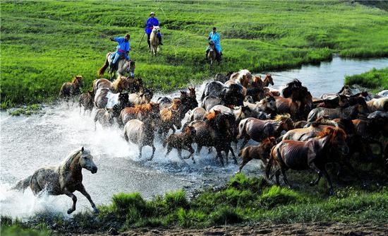 Mongolian horses: A breed apart