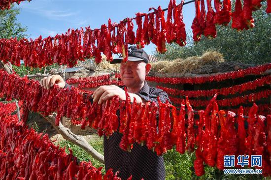 Red chili pepper harvested in Xinjiang