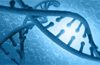 Mutations cause cancer by blurring growth signals: study