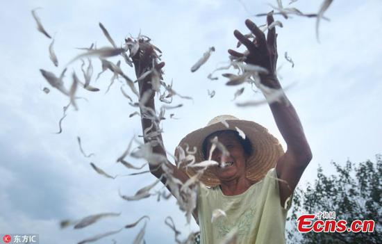 Dried fish prepared near Poyang Lake