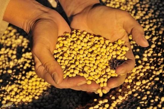 Chinese GM soybeans in Argentina expected to fill import gap