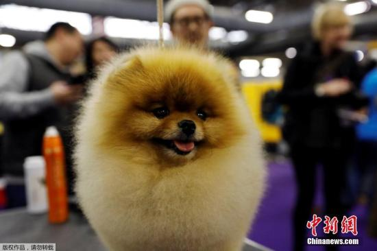 A pet dog at a competition. (File photo/Agencies)