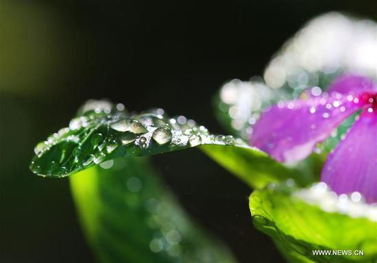 Sparkling dewdrops on plants