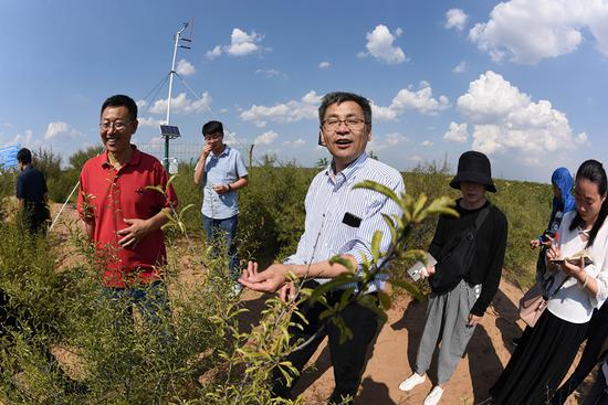 Geophysicist Shao Ming'an oversees the management and recovery of a sand ecosystem at an afforestation base in the Ordos Desert in Shenmu county, Shaanxi Province. (Photo/CHINA NEWS SERVICE)