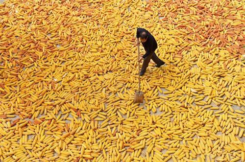 China embraces harvest season