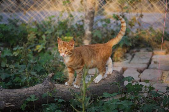Feline lovers invest $58,000 to set up 'cat paradise'